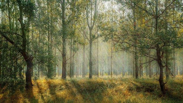 les ve slunečním světle