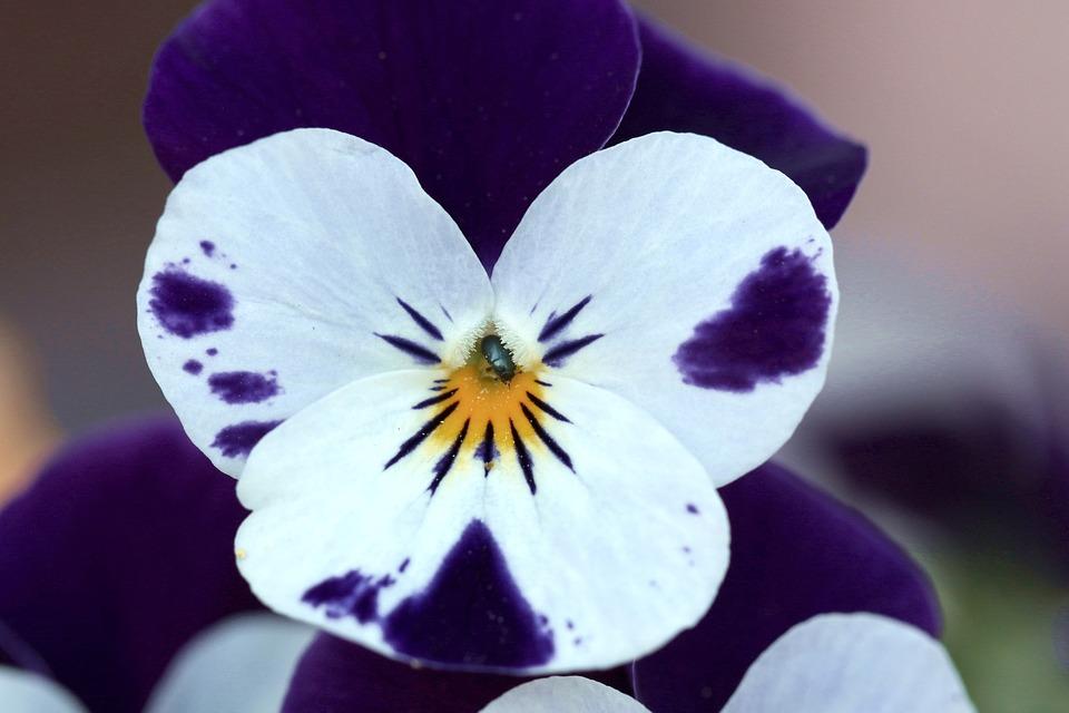 kvetoucí květina